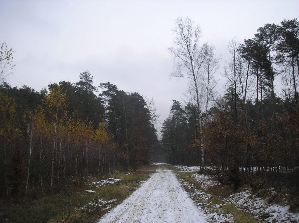 Rozwój osobisty Andrzej Wojtyniak